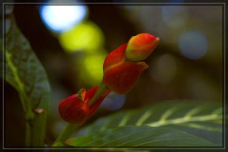 Oahu – Teil 1