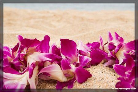 Maui Teil 5