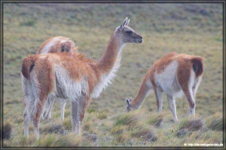 Cerro Sombrero – Punta Arenas