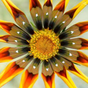 20150103-112230-flower-art 16708470830 O