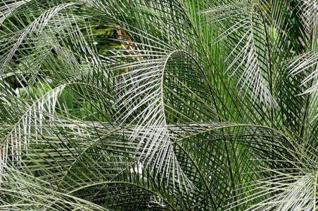 20150107-125128-singapore-botanical-garden 16944982342 O