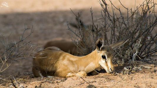 Keetmanshoop – Kgalagadi Transfrontier Park (Kalahari Tented Camp)