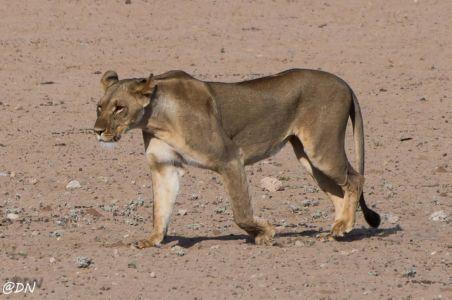 Kalahari Tented Camp – Nossob
