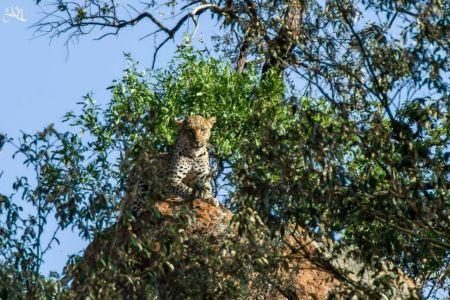 Pilanesberg National Park – Johannesburg – Frankfurt/Main