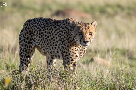 Mountain Zebra NP – Karoo NP