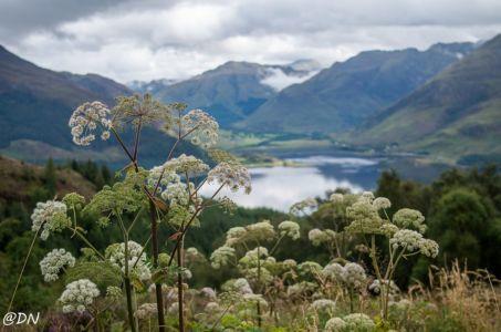 Isle of Skye - Isle of Mull