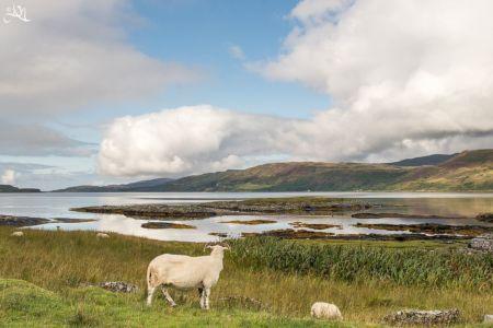 Ilse of Mull - Lochgoilhead