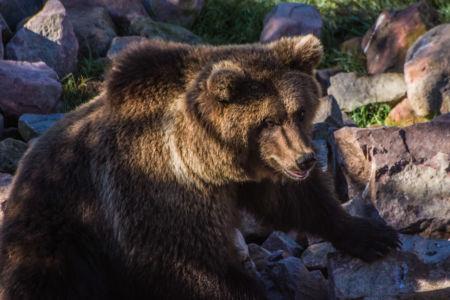 Björnpark (Bärenpark) Orsa